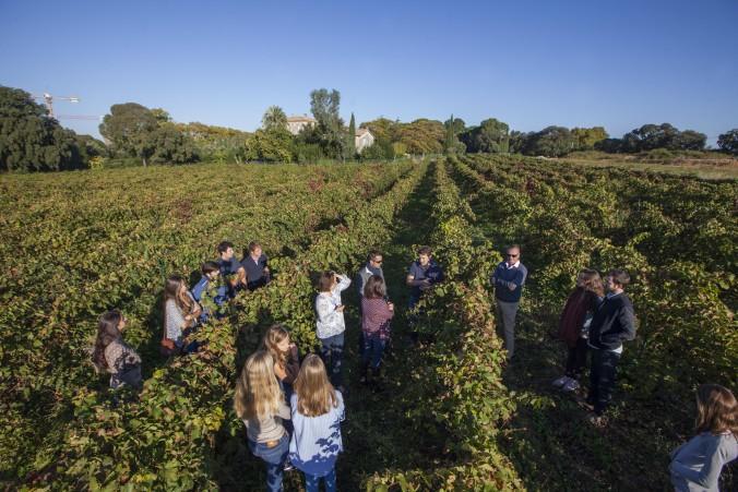 Visite dans les vignes château de flaugergues montpellier